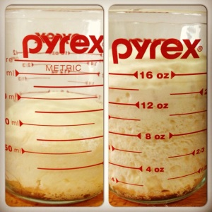 Placing dough in a measuring cup is an easy way to judge when the dough has doubled
